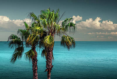 Photograph - Laguna Beach Palm Trees Near La In Southern California by Randall Nyhof