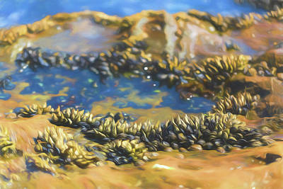 Photograph - Laguna Beach Tide Pool Pattern 3 by Scott Campbell