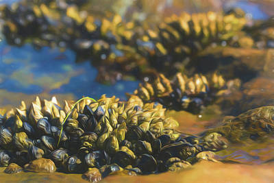 Photograph - Laguna Beach Tide Pool Pattern 4 by Scott Campbell