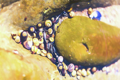 Photograph - Laguna Beach Tide Pool Pattern 5 by Scott Campbell