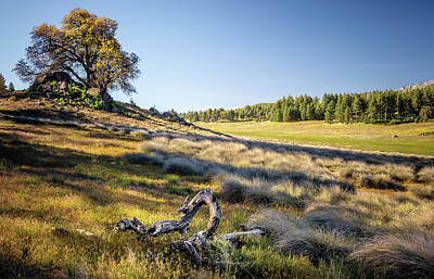 Photograph - Laguna Meadows - Evening Light by Alexander Kunz