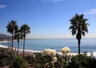 Photograph - Laguna Roses by David Nicholls