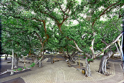 Banian Photograph - Lahaina Banyan Tree #6 - Overview Of A Huge Banyan Tree In Maui by Nature  Photographer