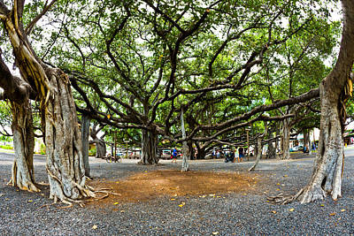 Lahaina Banyan Tree #7 - Huge Banyan Tree In A Park In Lahaina Art Print by Nature  Photographer