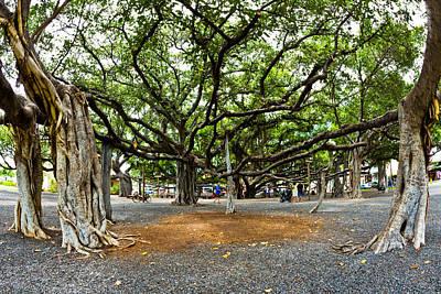 Banian Photograph - Lahaina Banyan Tree #7 - Huge Banyan Tree In A Park In Lahaina by Nature  Photographer