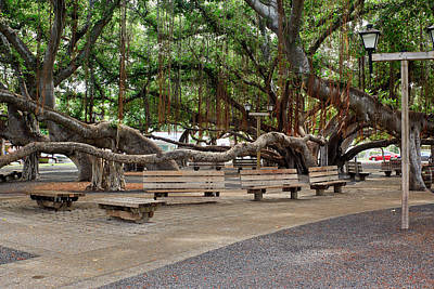 Banian Photograph - Lahaina Banyan Tree #9 - Lahaina Famous Banyan Tree by Nature Photographer