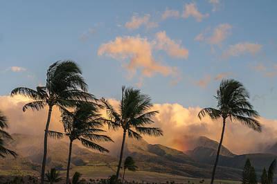 Photograph - Lahaina Palms by Robert Potts