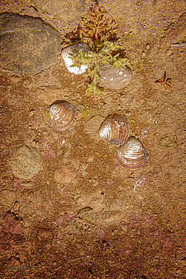 Photograph - Lake Almanor Drought Shells by LeeAnn McLaneGoetz McLaneGoetzStudioLLCcom