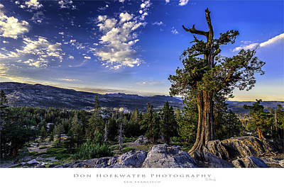 Photograph - Lake Alpine Tree by PhotoWorks By Don Hoekwater