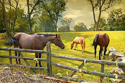 Photograph - Lake Avenue Horses by Diana Angstadt