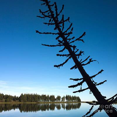 Deadwood Photograph - Lake by Bernard Jaubert
