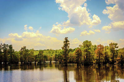 Photograph - Lake Bistineau Cypress   by Barry Jones