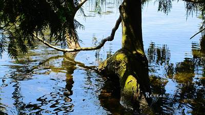 Photograph - Lake Branches by Sadie Reneau