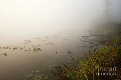 Photograph - Lake Cassidy  Marshes by Jim Corwin