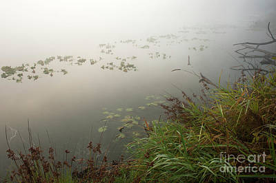 Photograph - Lake Cassidy  Shoreline With Marsh by Jim Corwin