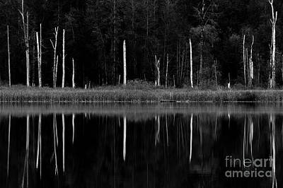 Photograph - Lake Cassidy With Dead Trees Reflection by Jim Corwin