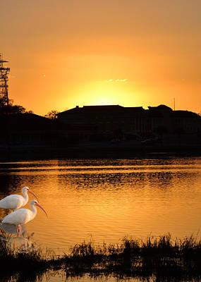 Photograph - Lake City Ibis At Sunset by rd Erickson