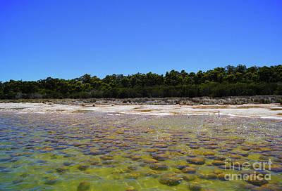 Photograph - Lake Clifton II by Cassandra Buckley