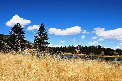 Photograph - Lake Cuyamac Trees And Yellow Grass  by Matt Harang