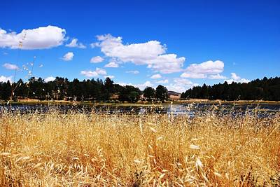 Photograph - Lake Cuyamac - Yellow Grass Foreground by Matt Harang