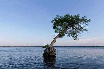 Photograph - Lake Disston Cypress #1 by Paul Rebmann