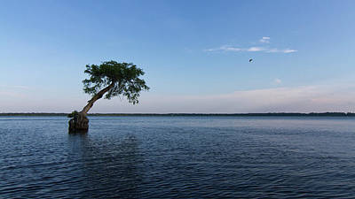 Photograph - Lake Disston Cypress #2 by Paul Rebmann