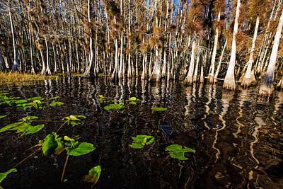 Florida Photograph - Lake Disston Cypress Cove by Stefan Mazzola