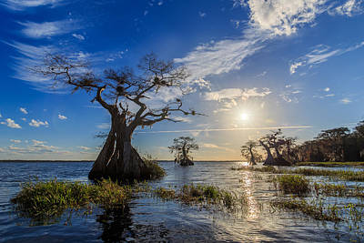 Florida Nature Photograph - Lake Disston Cypress Paradise by Stefan Mazzola