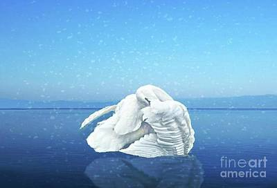 Photograph - Lake Effects And The Trumpeter Swan by Janette Boyd