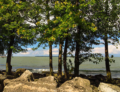 Photograph - Lake Erie Through The Trees by Shawna Rowe