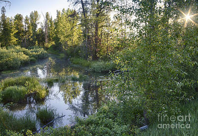 Photograph - Lake Fork Creek by Idaho Scenic Images Linda Lantzy