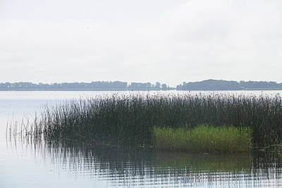 Photograph - Lake Grasses by Dart and Suze Humeston