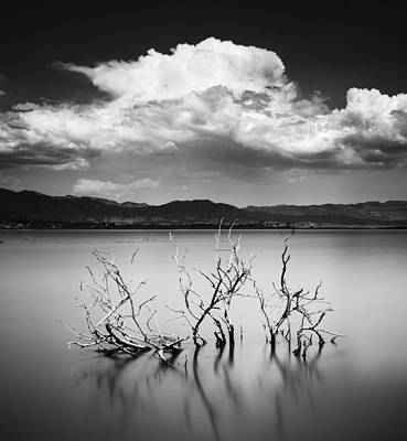 Photograph - Lake Henshaw Branches by William Dunigan