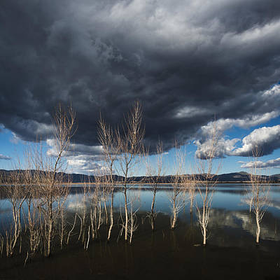 Photograph - Lake Henshaw Trees by William Dunigan