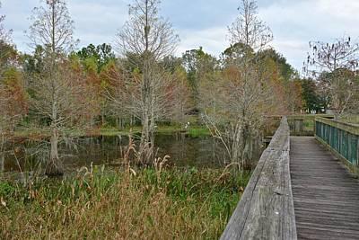 Photograph - Lake Howard Park by Carol Bradley