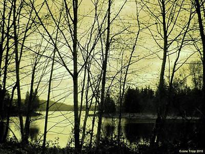 Lake In Winter Art Print by Jane Tripp