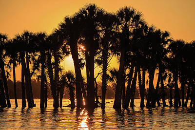 Photograph - Lake Jesup Sunset by Stefan Mazzola