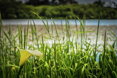 Photograph - Lake Lily by Chris McKenna