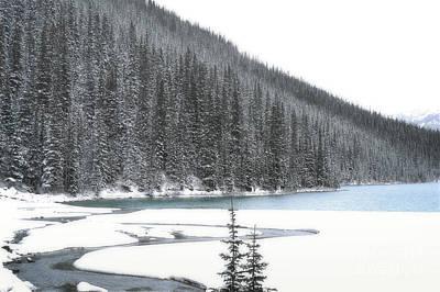 Photograph - Lake Louise Pine Trees Snow by Andrea Hazel Ihlefeld