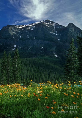 Photograph - Lake Louise Summer by Inge Riis McDonald