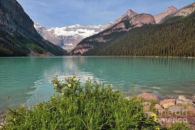 Photograph - Lake Louise With Wildflowers by Carol Groenen