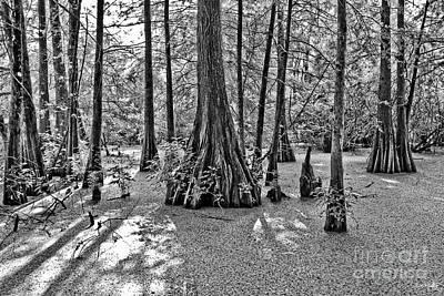 South Louisiana Photograph - Lake Martin by Scott Pellegrin