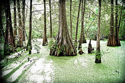 Lake Martin Swamp Art Print by Scott Pellegrin