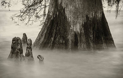 Photograph - Lake Maurepas Cypress by Andy Crawford