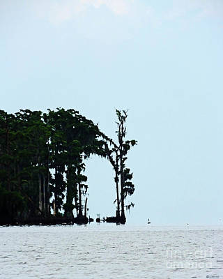 Photograph - Lake Maurepas Cypress by Lizi Beard-Ward