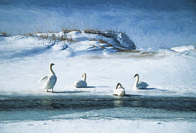 Photograph - Lake Michigan Swans by Dennis Cox WorldViews