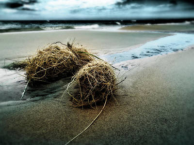 Photograph - Lake Michigan Tumbleweed by Kelly Morrow