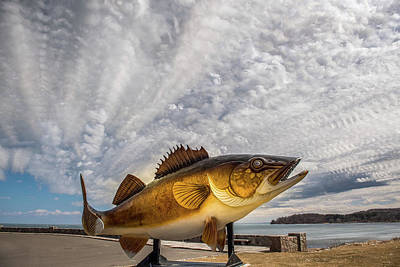 Photograph - Lake Mille Lacs Walleye by Paul Freidlund