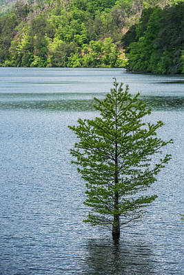 Ocoee Photograph - Lake Ocoee Cypress by Paul Freidlund