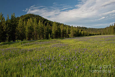 Photograph - Lake Of Camas by Katie LaSalle-Lowery